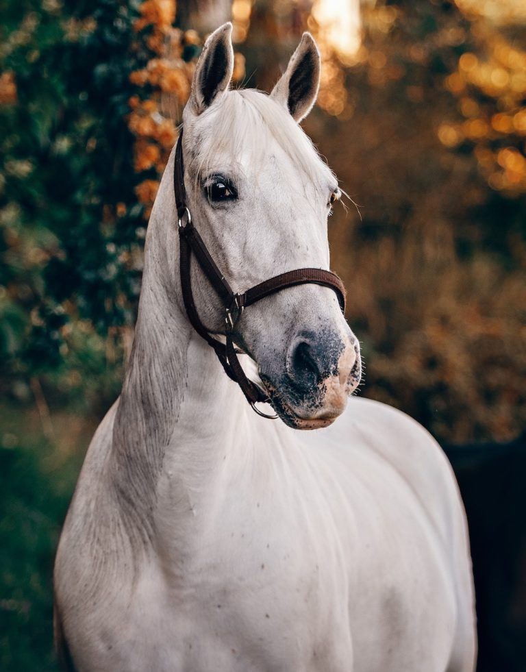 a beatiful white horse